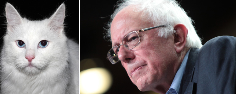 Bernie Sanders with a cat