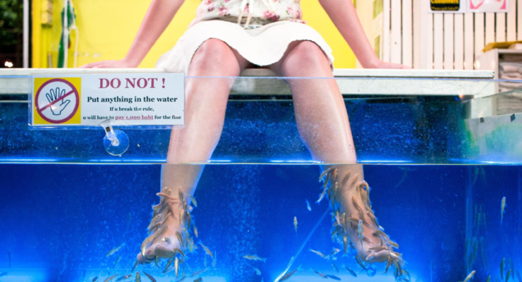 A Nibble for the Economy: Bill Would Have Brought Fish Pedicures to Nevada