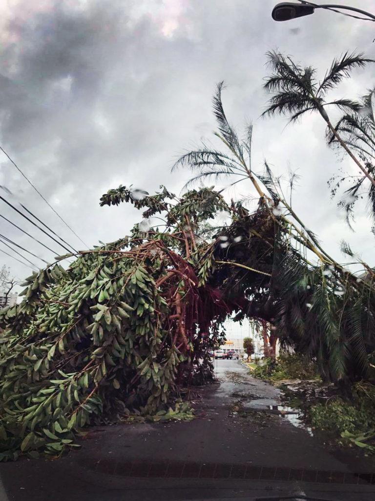 Fallen Trees Puerto Rico