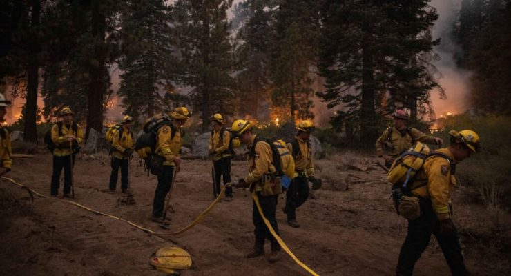 Firefighters working in a forest